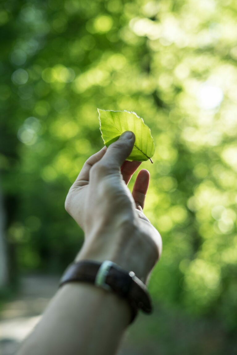 Eco-Friendly Business Ideas: How to Create a Green Business